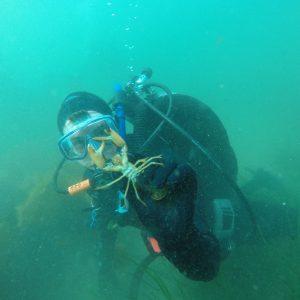 dive lobster marine ocean darling