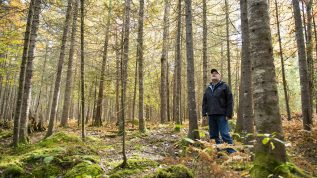 bob wagner forest spruce budworm