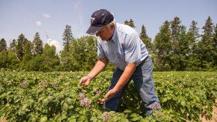 gregory porter potato research field farm