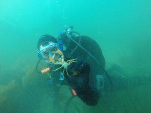 dive lobster marine ocean