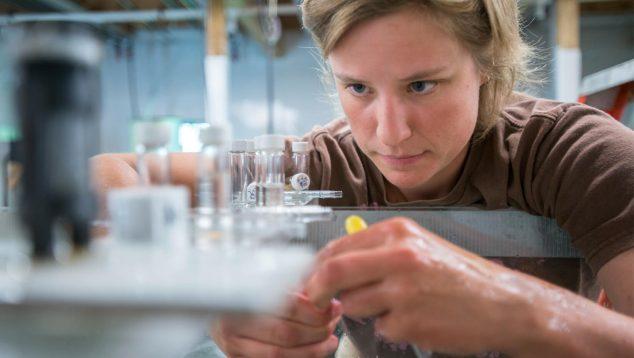 skylar baker scallop gonad research lab