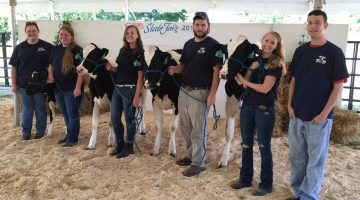 state fair dairy cattle students