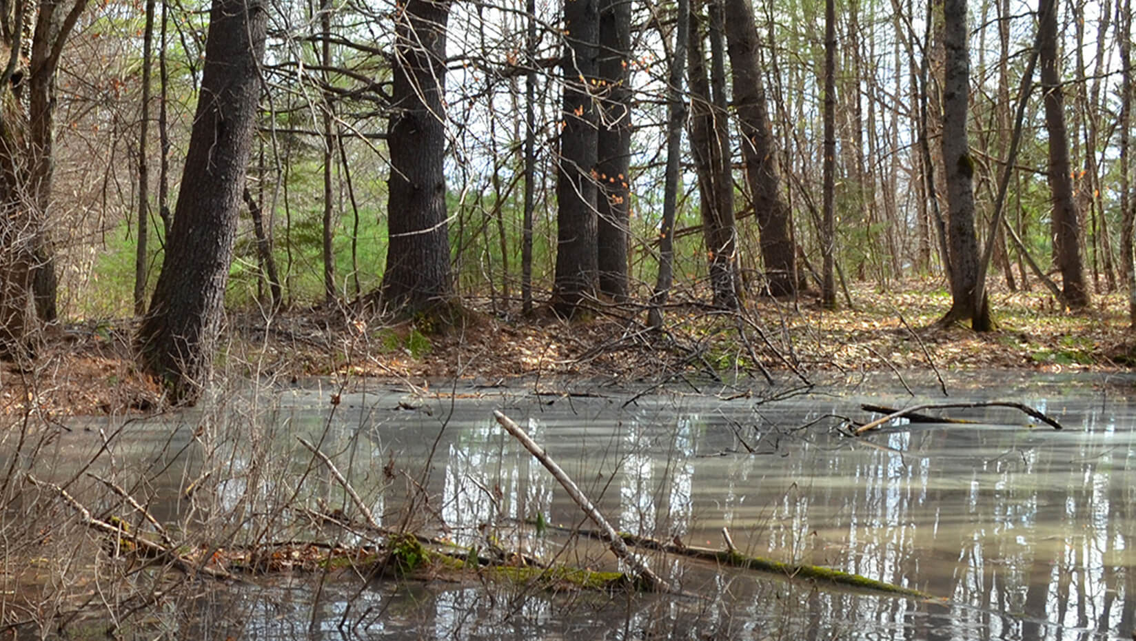 featured image for In Maine's new vernal pool plan, conservation and communities win