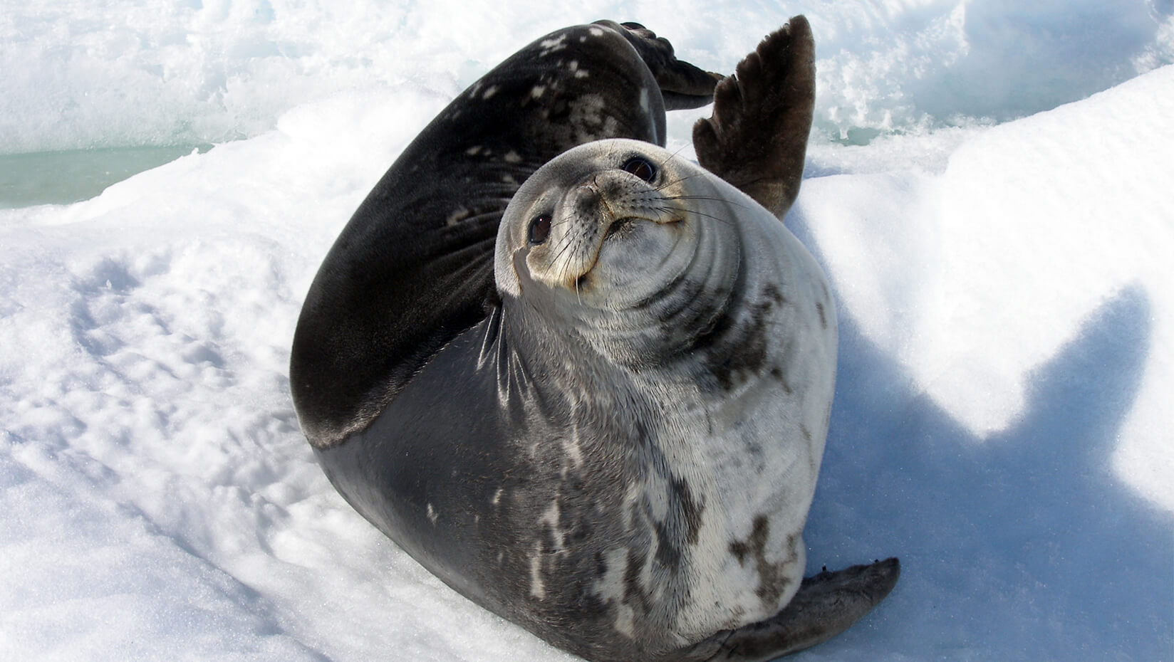 featured image for Researcher charts advances in marine mammal genetic sequencing