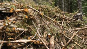 woody-biomass-news-feature