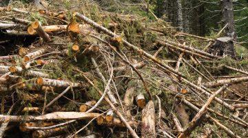 woody-biomass-news-feature