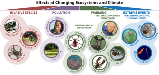 one health climate change effects umaine
