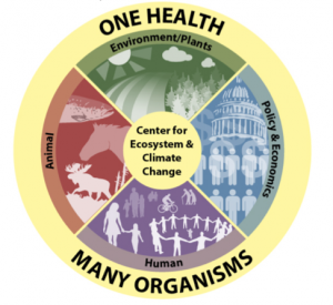 Initiative for ONE HEALTH and the ENVIRONMENT at UMaine logo