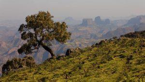 2017-6-14 Ethiopian-Highlands-news-feature