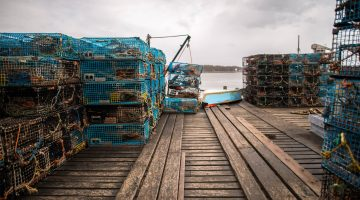 lobster traps dock marine