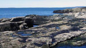 seaweed coast news feature