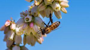 bee mapper