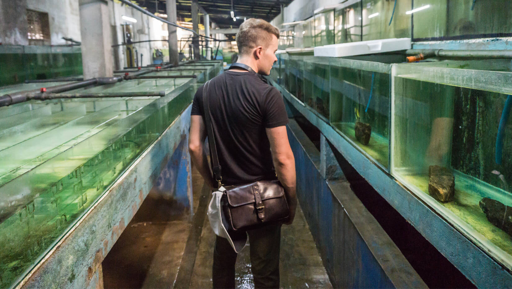 featured image for Bryce Risley: SMS grad student focuses on future of marine ornamental species trade in a changing world