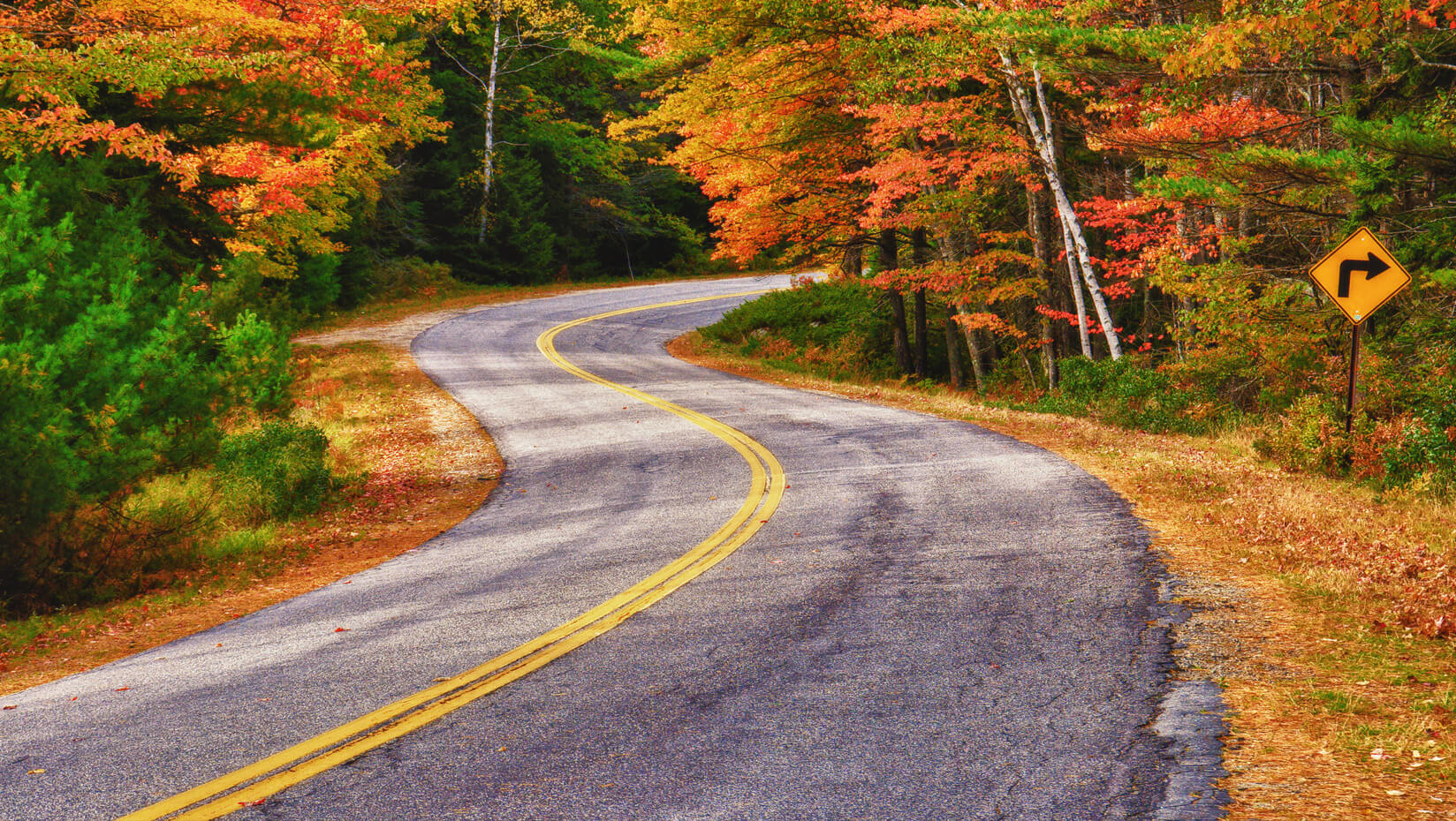 umaine forest autumn road