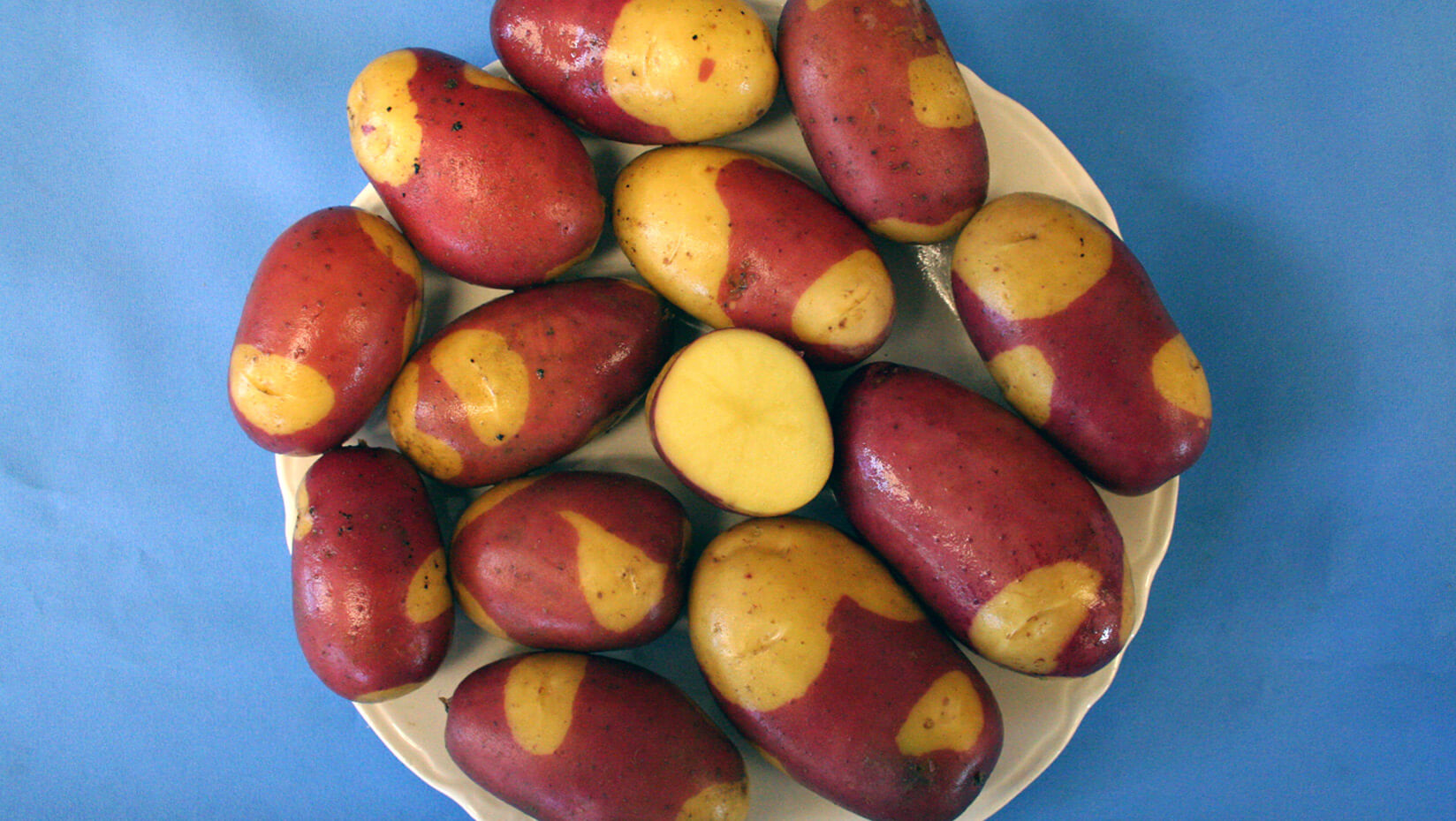 featured image for UMaine develops new potato variety for gourmet, specialty markets