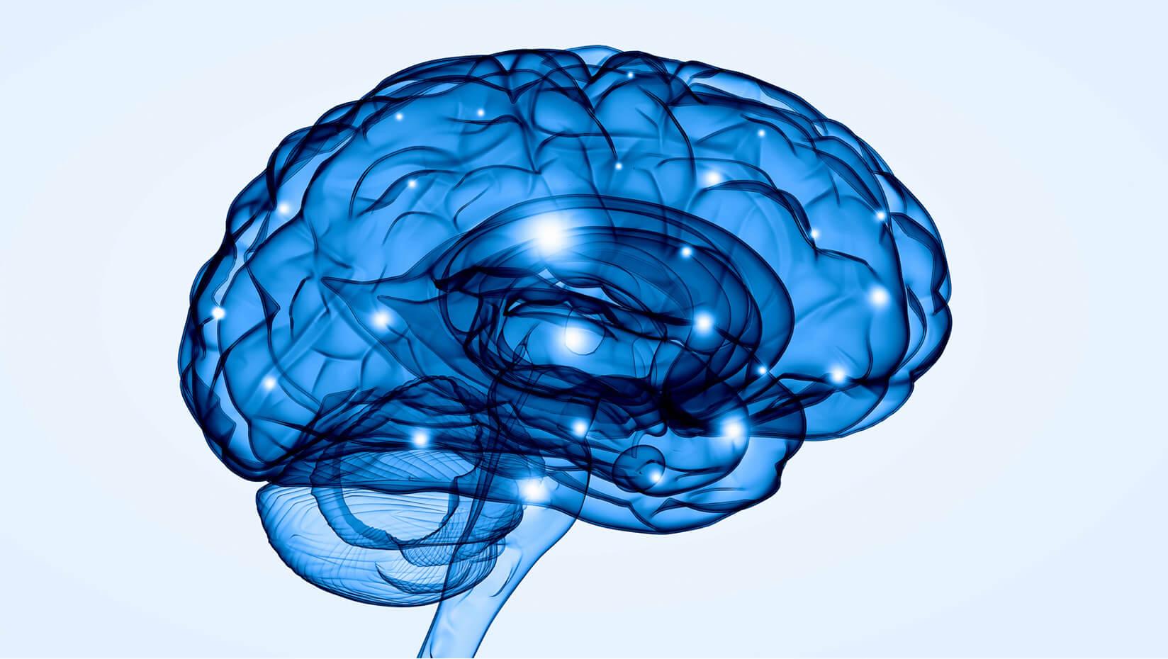 umaine brain health research