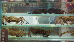 umaine china seafood market lobter crab