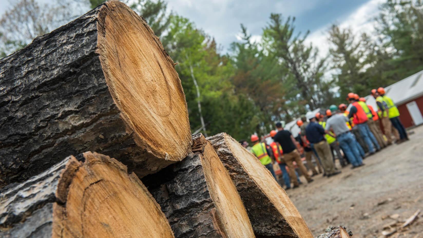 umaine forestry lumber