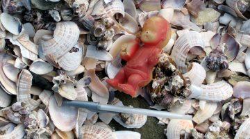 sea shells trash plastic pollution