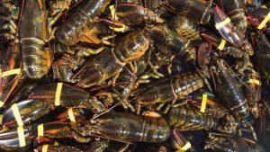 lobster umaine