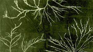 Macro photo of rock weed