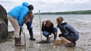Students with clam rakes examining marine life on a beach