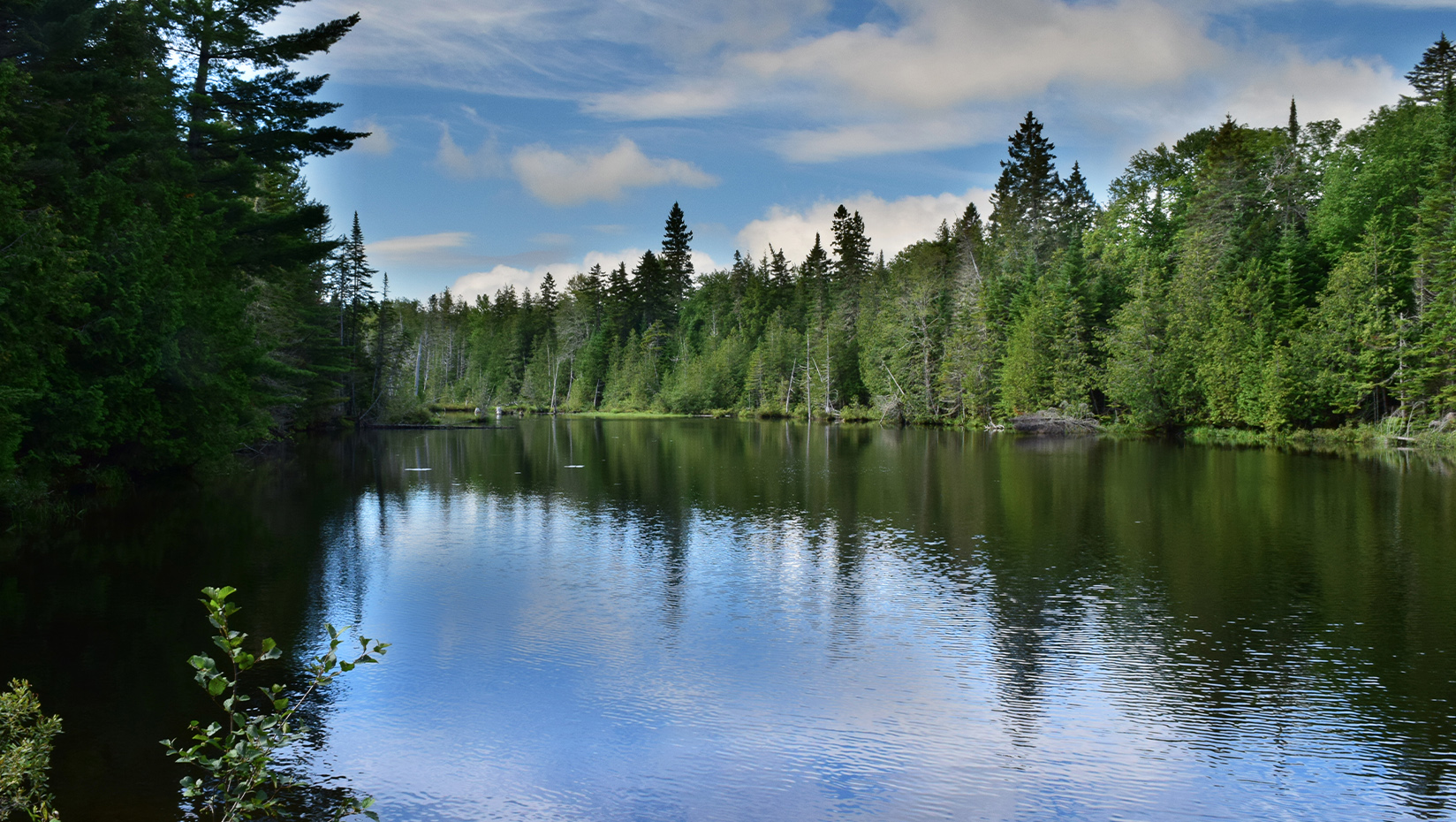 lake with a forested shoreline in Maine