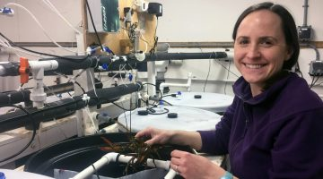 Amalia Harrington working in a lab with lobsters