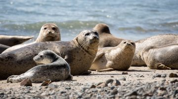 seals on a beach