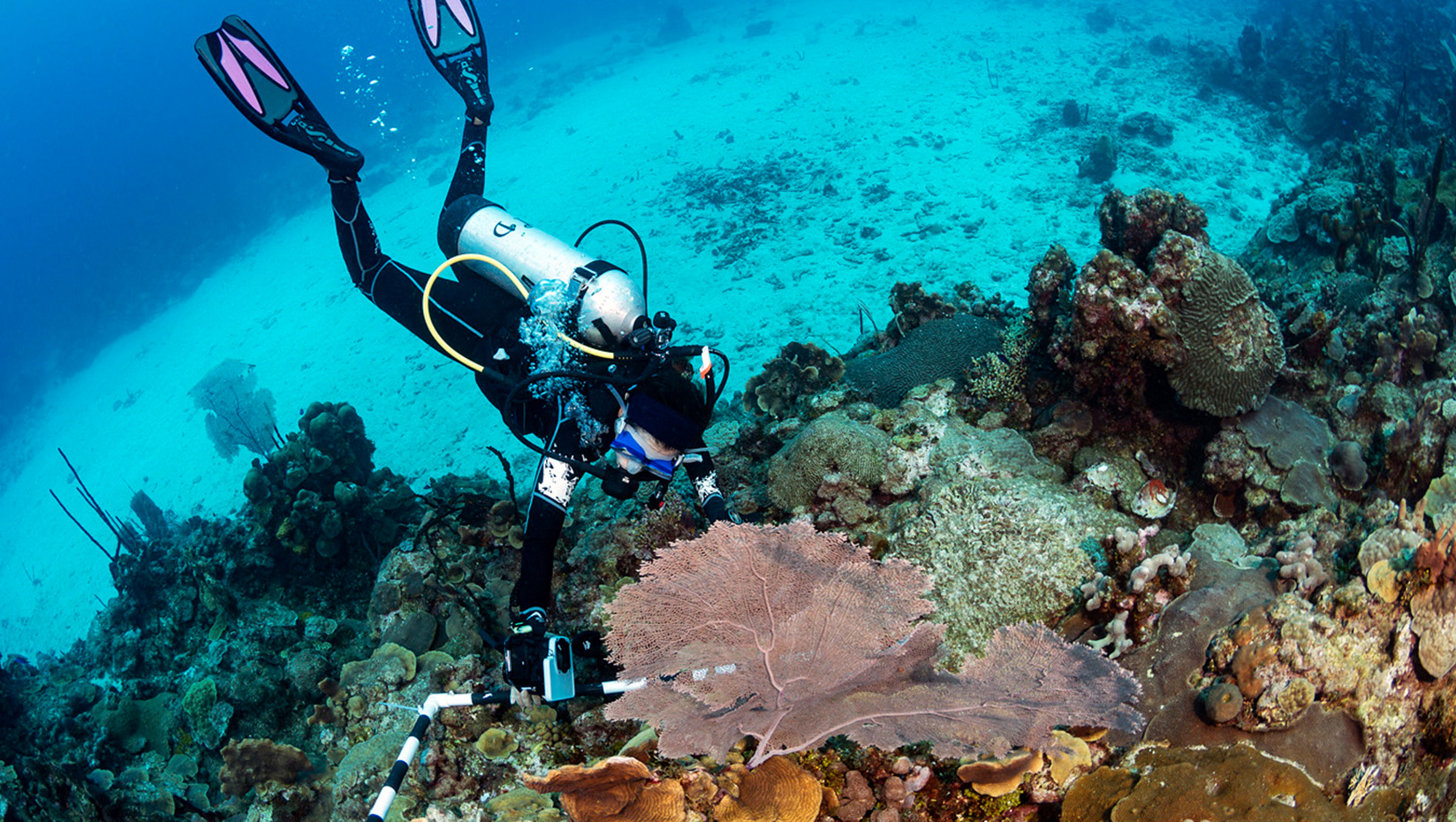 Diver surveys coral reef in the tropical waters off the Dominican Republic.