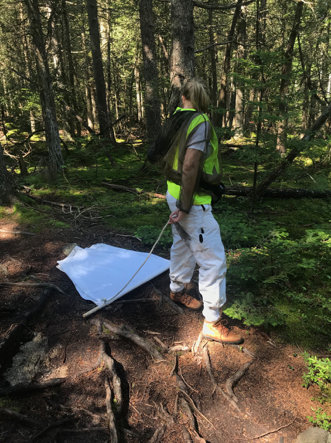 Shayla Miller working in the forest