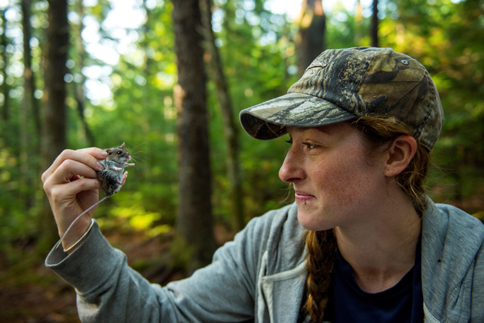 Allison Brehm holding a mouse captured for a research project in a forest.